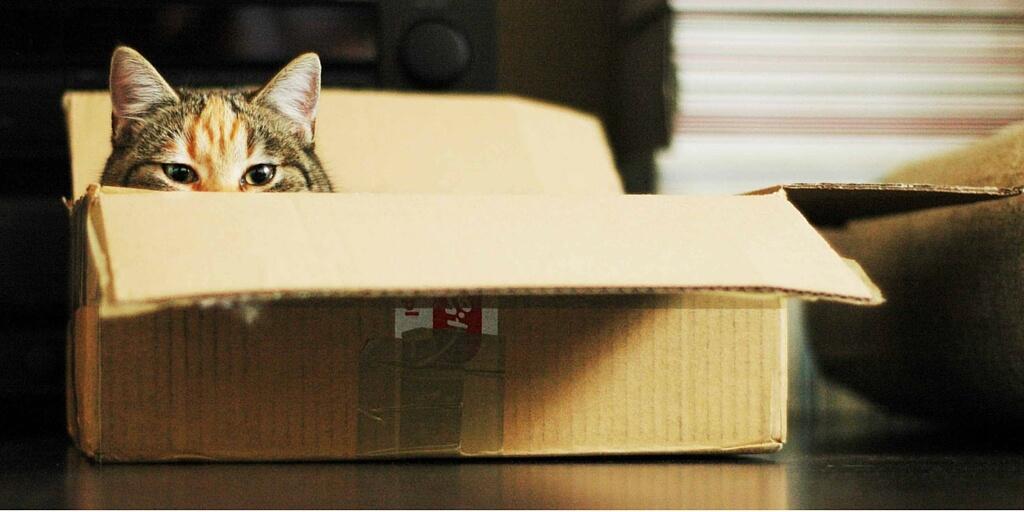 γάτα σε κουτί