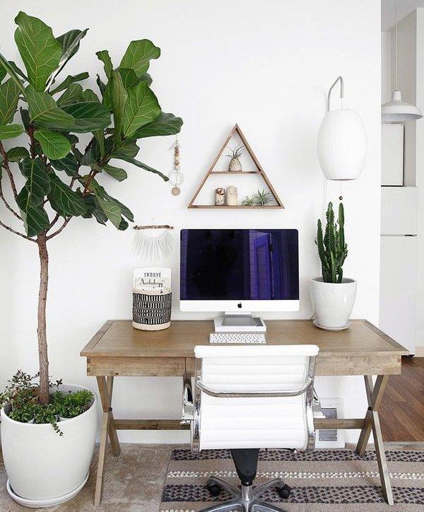 Φυτά γραφείου
