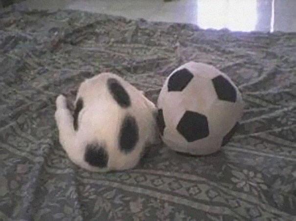 γάτα με μπάλα