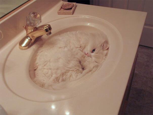 γάτα στο νεροχύτη