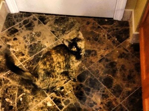 γάτα ίδια με το πάτωμα