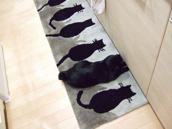 γάτα διαφορές