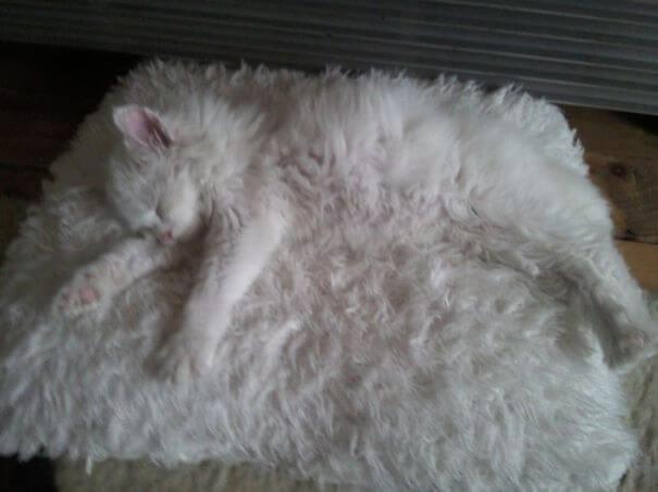 γάτα στο χαλάκι