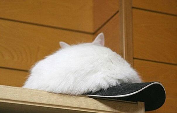 γάτα σε καπέλο