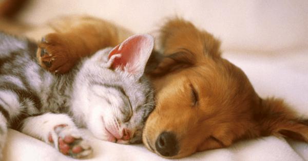 σκυλάκι και γατάκι